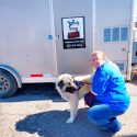Mutt Cutts mobile dog grooming