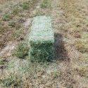 Alfalfa 65lb Bales $150 a Ton