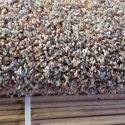 Wall to Wall Carpet - Great condition